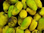 picture of mangoes found in malaysia