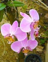 beautiful orchids
