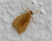 moth picture