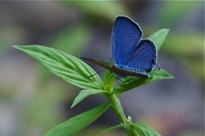 image of a small beautiful butterfly in Malaysia