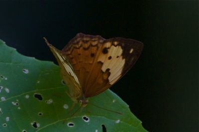 Rustic butterfly picture