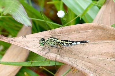 dragonfly picture