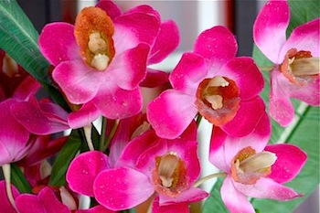 red colored orchids