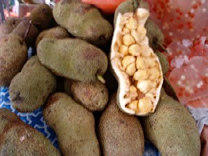 picture of cempedak fruit found in malaysia