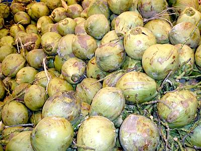 picture of coconuts in malaysia