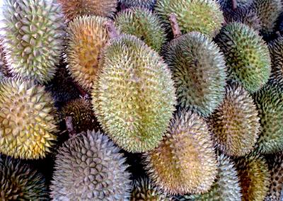 picture of durian fruit found in malaysia