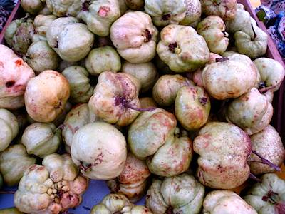 picture of guava (jambu) fruit found in malaysia
