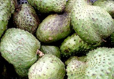 picture of soursop fruits