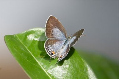 photo of a malaysian butterfly
