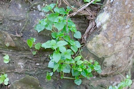 small plants at jebak puyuh limestone hill