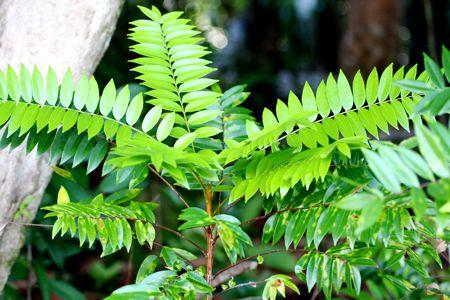 green plants growing at lakes of malaysia