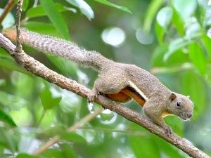 picture of squirrel