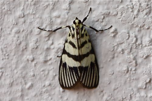 moth photo
