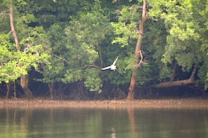 picture of eagle-over-river