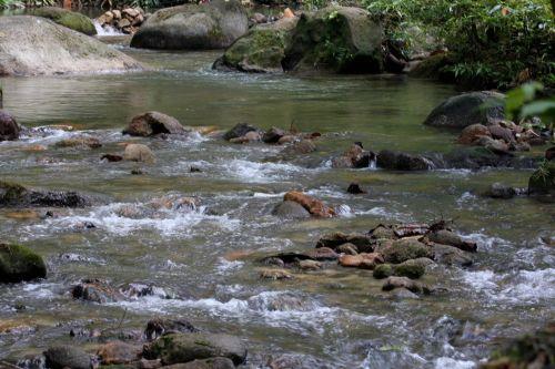 stream at taman rimba ampang, kuala lumpur