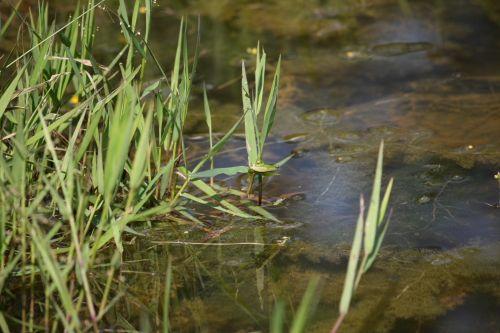 taman rimba ampang in kuala lumpur
