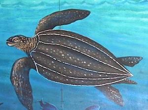 image of a leatherback turtle