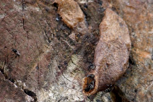 wasps nest on tree picture